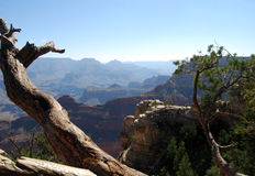 Grand Canyon dead tree Stock Photo