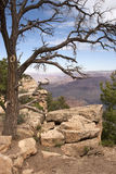 Grand Canyon Dead Tree Stock Image