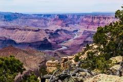 Grand Canyon del este del borde del sur; árboles de pino en el primero plano, el río Colorado abajo Imagen de archivo