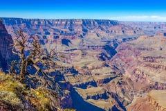 Grand Canyon e vecchia priorità alta asciutta dell'albero, Arizona, U.S.A. fotografia stock libera da diritti