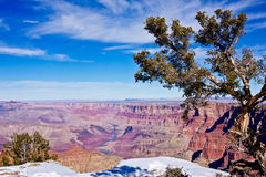 Grand Canyon Foliage Royalty Free Stock Photography