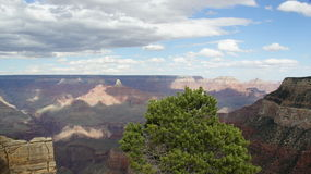 Grand Canyon från kant Arkivbild