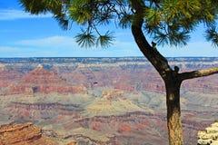 Grand Canyon från under sörjatreen arkivfoto