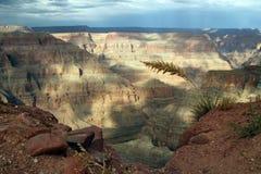 Grand Canyon -het Westenmening Stock Afbeelding