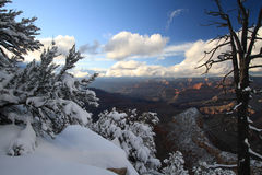 Grand Canyon i snow Arkivfoto