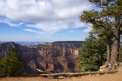 Grand Canyon landscape. A view over the Grand Canyon with a fallen tree on the foreground Stock Photos