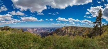Grand Canyon landskap Royaltyfria Bilder