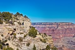 Grand Canyon male visitor mountain view top. Male visitor perched on grey rock cliff edge overlooking red rocks of Grand Canyon stock images