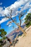 Grand Canyon Meditation Royalty Free Stock Photo