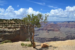 Grand Canyon. The Grand Canyon is 277 miles long, up to 18 miles wide. This is very amazing scenery. Me must watching a long time. This canyon have a power for Stock Photography