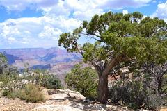 Grand Canyon. The Grand Canyon is 277 miles long, up to 18 miles wide. This is very amazing scenery. Me must watching a long time. This canyon have a power for Royalty Free Stock Photography