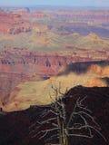 Grand Canyon min sikt Royaltyfri Fotografi
