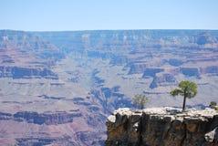 Grand Canyon mit Baum in der vordersten Reihe Lizenzfreie Stockfotos