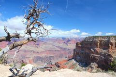 Grand Canyon Mohave Point Stock Images