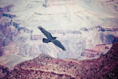 Grand Canyon National Park, Arizoan. Stock Images