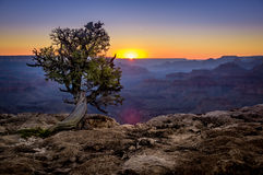 Grand canyon national park arizona Stock Photos