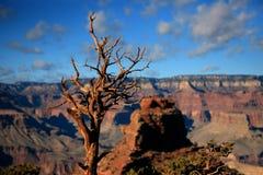 Grand Canyon National Park. Arizona, 2014 Fall Stock Photo
