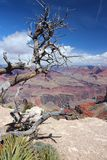 Grand Canyon scenic view. Grand Canyon National Park in Arizona, United States. Colorado River visible. Mohave Point view Stock Photos