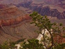 Grand Canyon National park, desert American landmark Stock Image