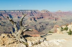 Grand Canyon National Park. View at the Grand Canyon National Park Stock Photo