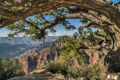 Grand Canyon, Nordfelge Stockbild