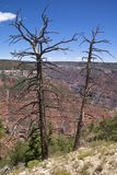 Grand Canyon North Rim Royalty Free Stock Photo
