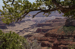 Grand Canyon North Rim Royalty Free Stock Photo