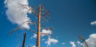 Grand Canyon, North Rim, Arizona, United States of America.  royalty free stock photos