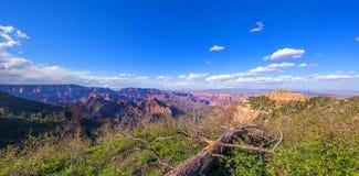 Grand Canyon, North Rim, Arizona, United States of America.  stock images