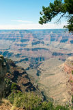 Grand Canyon. The North Rim of the magnificent Grand Canyon Stock Photography