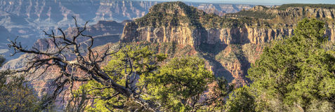 Grand Canyon, north rim Royalty Free Stock Photography