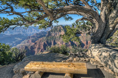 Grand Canyon, north rim Royalty Free Stock Photo