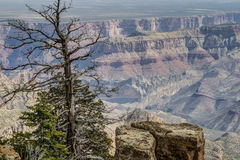Grand Canyon, north rim Stock Images