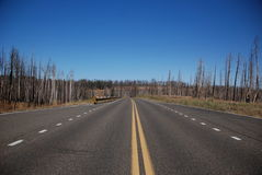Grand Canyon north rim road Stock Images