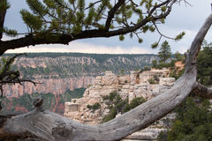 Grand Canyon North Rim. A shot from one of the hiking trails in the north of Grand Canyon Royalty Free Stock Photos