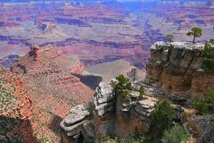 Grand Canyon och Trees Arkivbilder