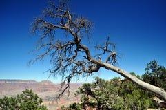 Grand Canyon - orlo del sud Fotografia Stock