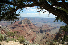 Grand Canyon Overlook. Grand Canyon with Tree stock images