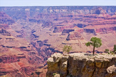 Grand Canyon Overlook Stock Image