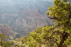 Grand Canyon Overlook Royalty Free Stock Photos