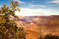 Grand Canyon Overview. In fall arizona Stock Images