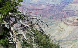 grand canyon północny hoop Zdjęcie Royalty Free