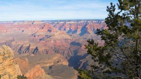 Grand Canyon in pino di Sunny Day On Background Of immagine stock