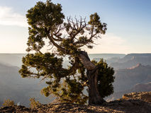 Grand Canyon Rim Sunset del sud Fotografia Stock Libera da Diritti