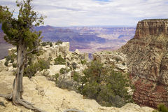 Grand Canyon Scenic South Rim Stock Images