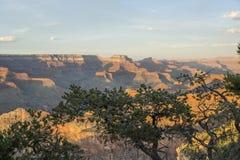 Grand Canyon sikt över träd royaltyfri bild