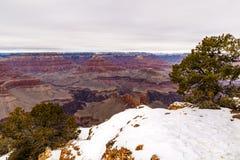 Grand Canyon sikt från södra kant med träd och snö Arkivbilder