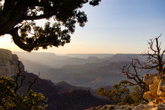 Grand Canyon skyline in evening sunlight Royalty Free Stock Image