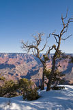 Grand Canyon snow dusting Royalty Free Stock Photos