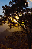 Grand Canyon Sunrise Behind Tree Royalty Free Stock Photography